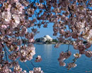"""Jefferson Memorial on the Tidal Basin"" by Gerry Gantt – Photography"
