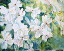 """Dogwood"" 20x16 Watercolor on Paper by Carie Cole"
