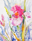 """Iris"" 14x18 Watercolor on Paper by Carie Cole"