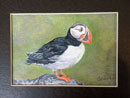 """Puffin"" by Tina Kannapel – Colored Pencil Drawing"