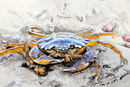 """Blue Crab"" by Tina Kannapel (Colored Pencil)"